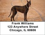 Gigantic Great Danes Address Labels