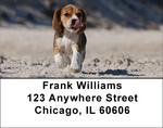 Brilliant Beagle Address Labels