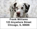 Dalmatian Address Labels