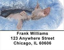 Hairless Sphynx Kittens Address Labels