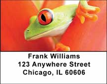 Frogs Address Labels
