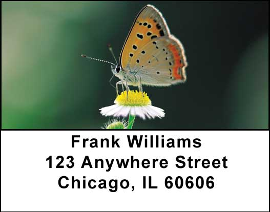 Butterflies in Nature Address Labels