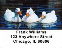 Ducks Address Labels