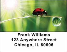 Ladybugs Address Labels