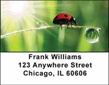 Ladybugs Address Labels