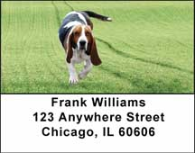 Basset Hounds Address Labels