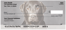 Labrador Retriever Checks - Black Lab Custom Checks