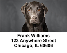 Black Labradors Address Labels