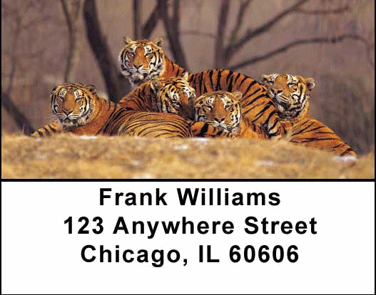 Bengal Tigers Address Labels