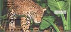 Big Cats Personal Checks
