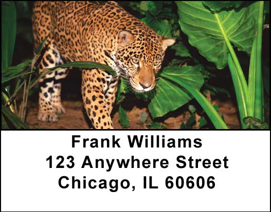 Big Cats Address Labels