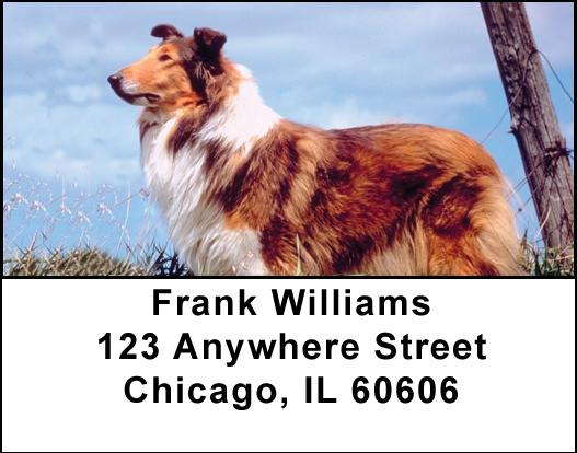 Collies Address Labels