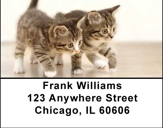 Cute Kittens Address Labels