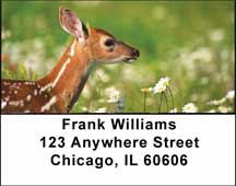 Deer Fawn Address Labels